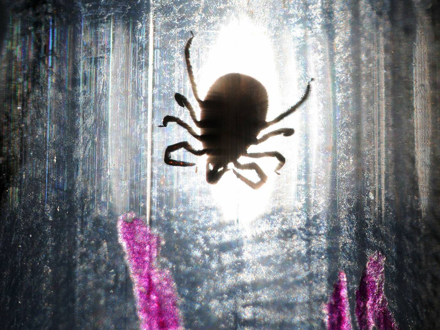 Чем опасен укус клеща и как избежать трагических последствий
