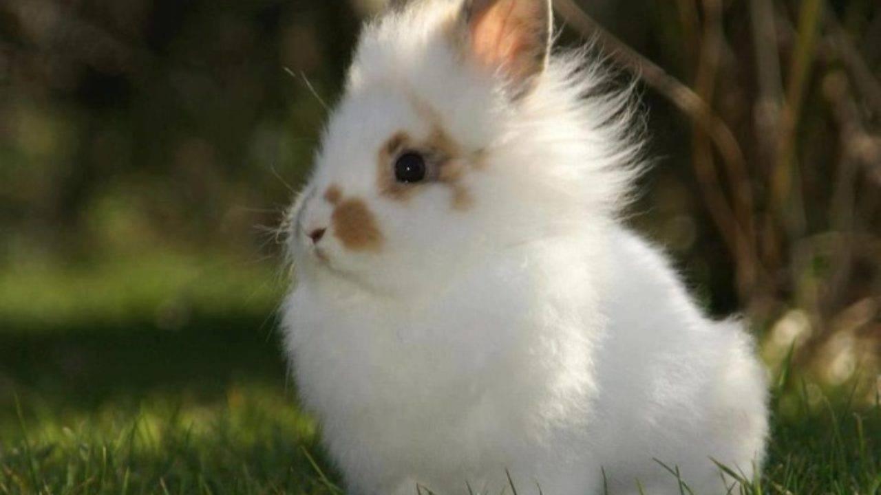 Чем и как вывести блох у кролика