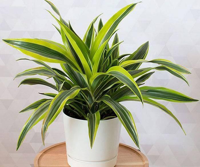 Щетинистый мучнистый червец. мучнистый червец на комнатных растениях: борьба и профилактика