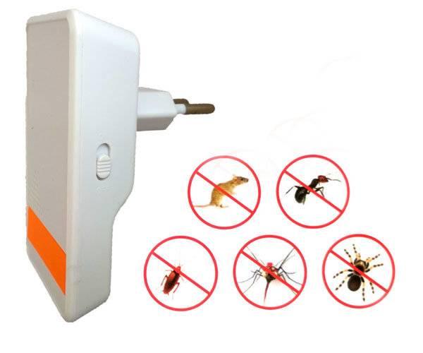 Как избавиться от муравьев: что реально работает