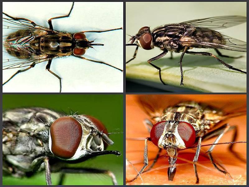 Кусаются ли домашние тараканы: как выглядят укусы насекомого на теле человека