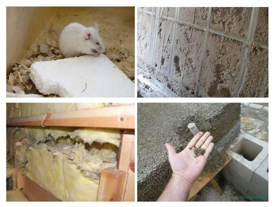 Пеноплекс едят ли его мыши