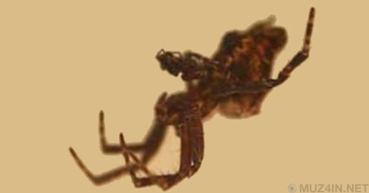 Самка богомола – размножение и зачем откусывает голову самцу?