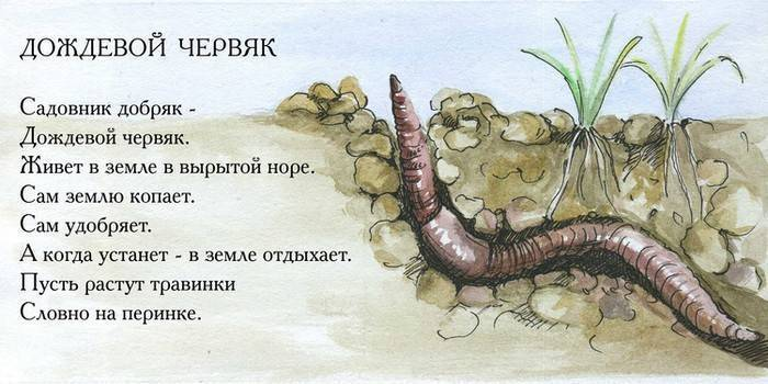 Жизненный цикл дождевых червей. дождевой червь. описание животного и роль в природе