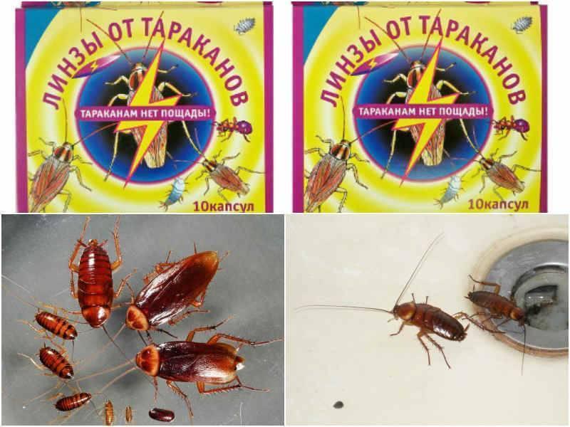 Средство делиция от тараканов
