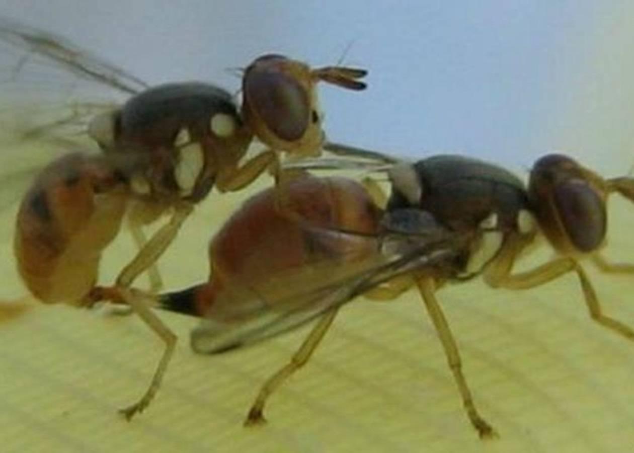 Домашние мухи – чем опасны для человека, и как от них избавиться