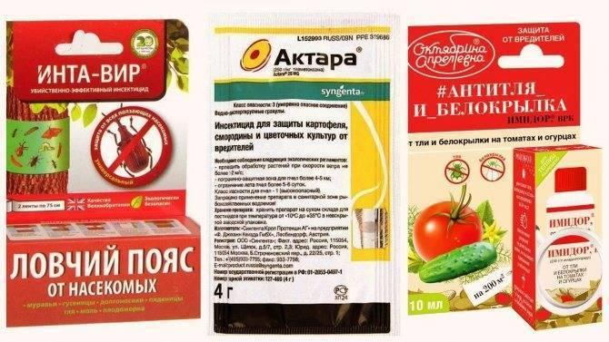 Препараты для весенней обработки плодовых деревьев. правила опрыскивания