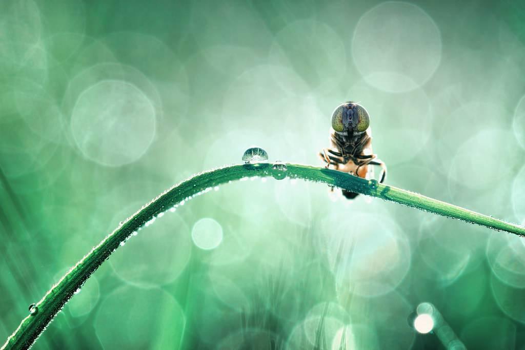 Как убить муху: все методы избавления от летающего вредителя