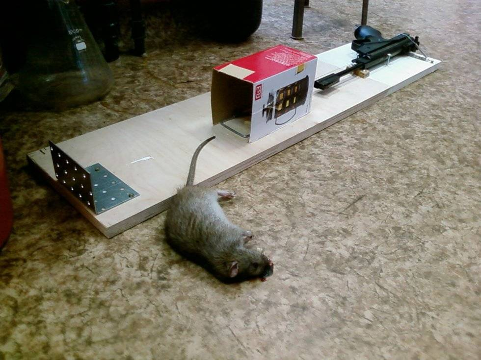 Действенные ловушки для крыс