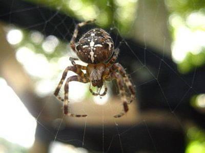 Укусы пауков: что делать, первая помощь