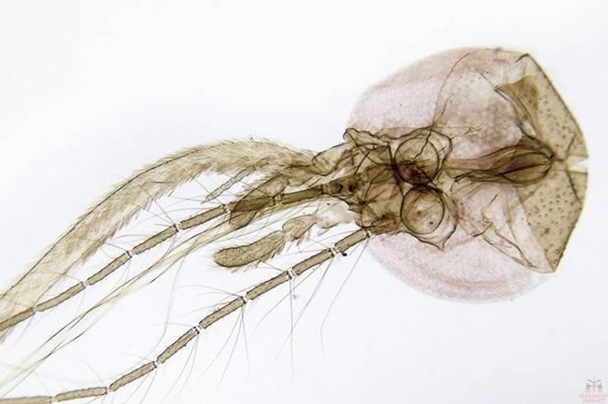 Как видят комары и что их привлекает к человеку. ученые выяснили, как комары находят и выбирают свою жертву видят ли комары в темноте