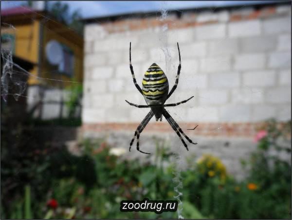 Рейтинг опасных пауков, обитающих в росcии