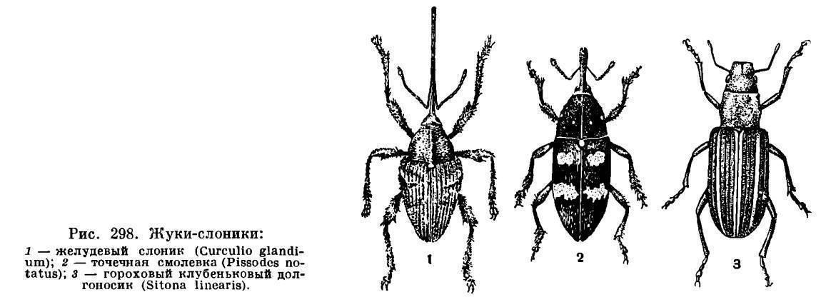 Усач небесный – самый красивый жук приморья