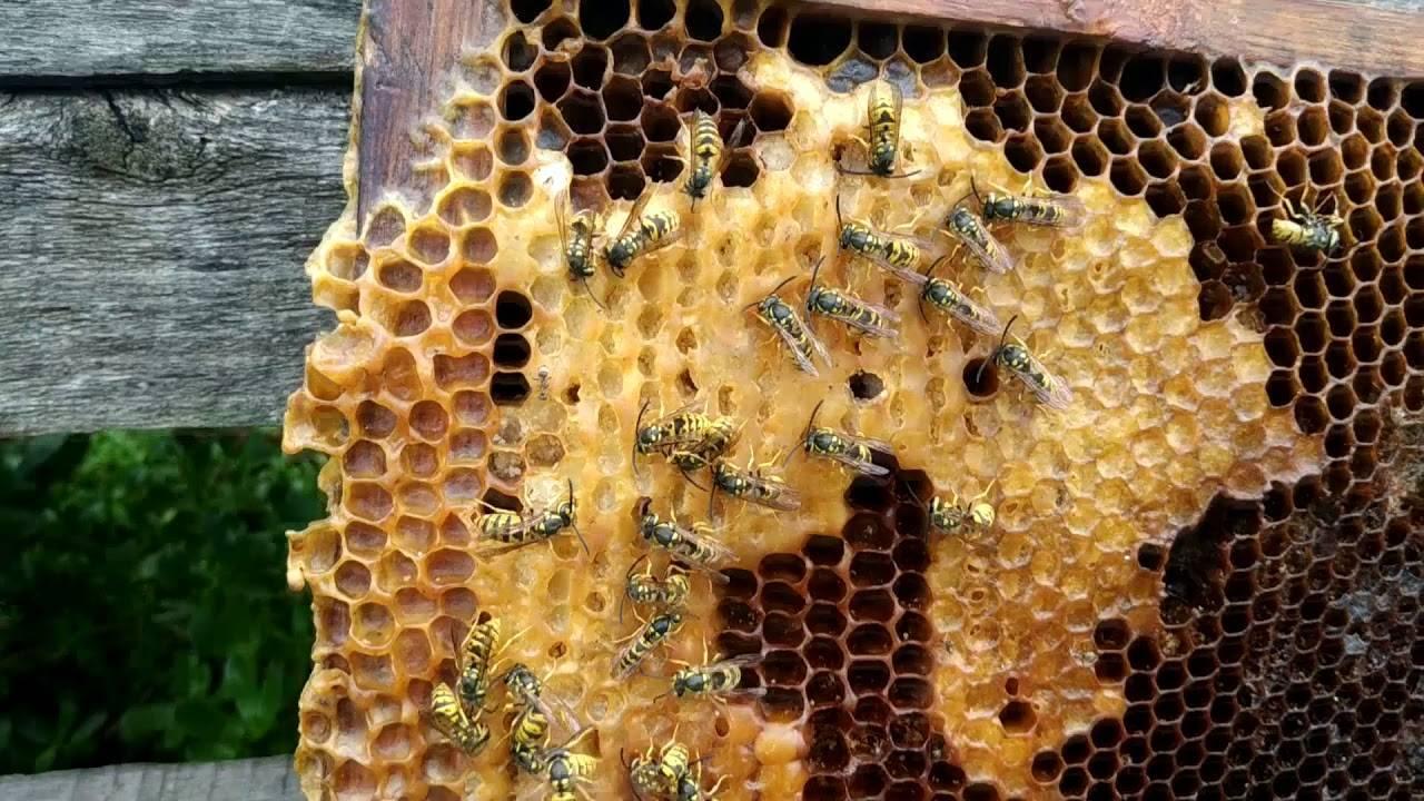 Как просто и эффективно избавиться от ос и пчел