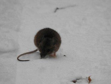 Зимние прогулки: следы на снегу