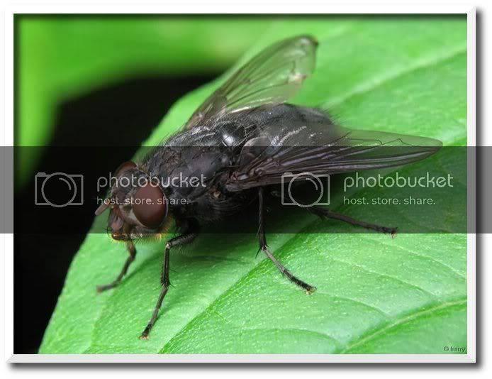 Личинки мух в человеке