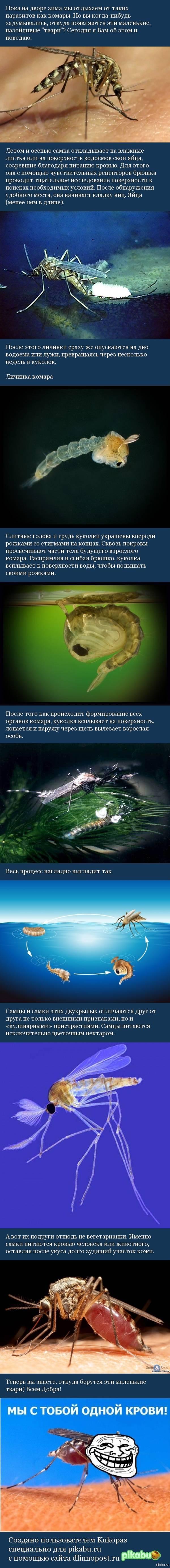 Откуда появляются комары