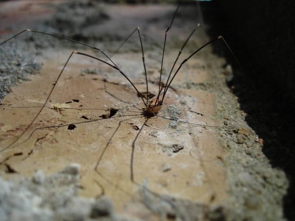 Как избавиться от пауков в доме (безопасные методы)