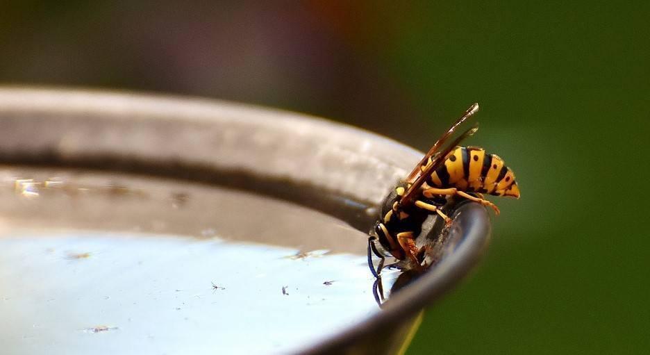 Что делать, если укусила пчела или оса?