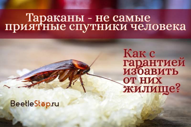 Фотографии и виды тараканов, живущих в наших домах