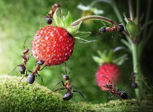 Как избавиться от муравьев в доме — обзор лучших средств и методов