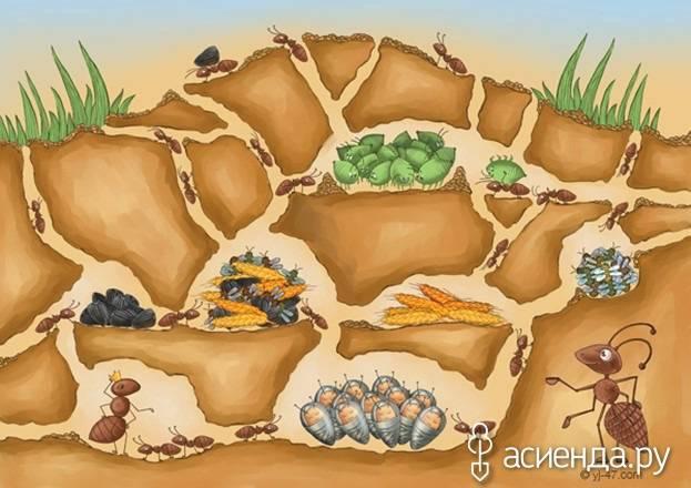 Мелкий вредитель — большая проблема, или как избавиться от клещей в саду?