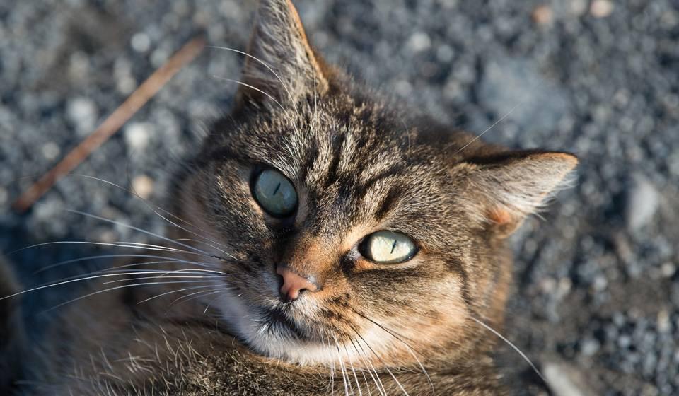 Ушной клещ у кошек: эффективное лечение отодектоза