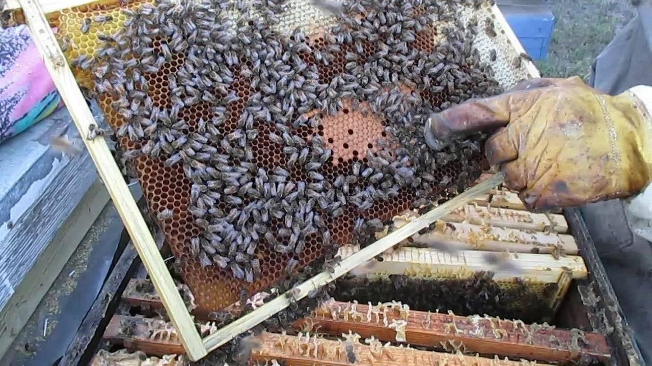 Основные варианты зимовки пчел