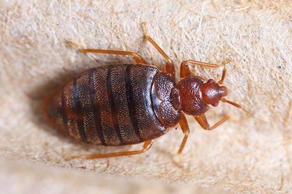 Комбат средство от тараканов и клопов — инструкция по применению