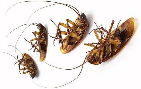 Откуда в квартире появляются тараканы