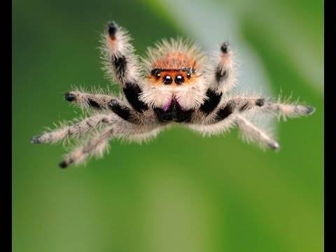 Опасен ли паук крестоносец