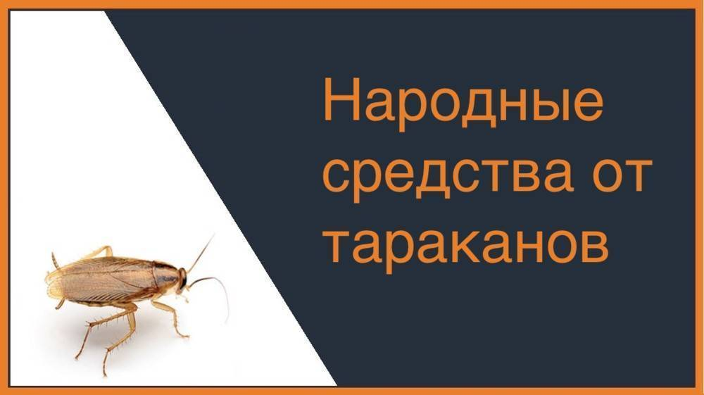 Как уничтожить тараканов используя народные средства