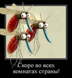 Народные средства от комаров: обзор проверенных рецептов