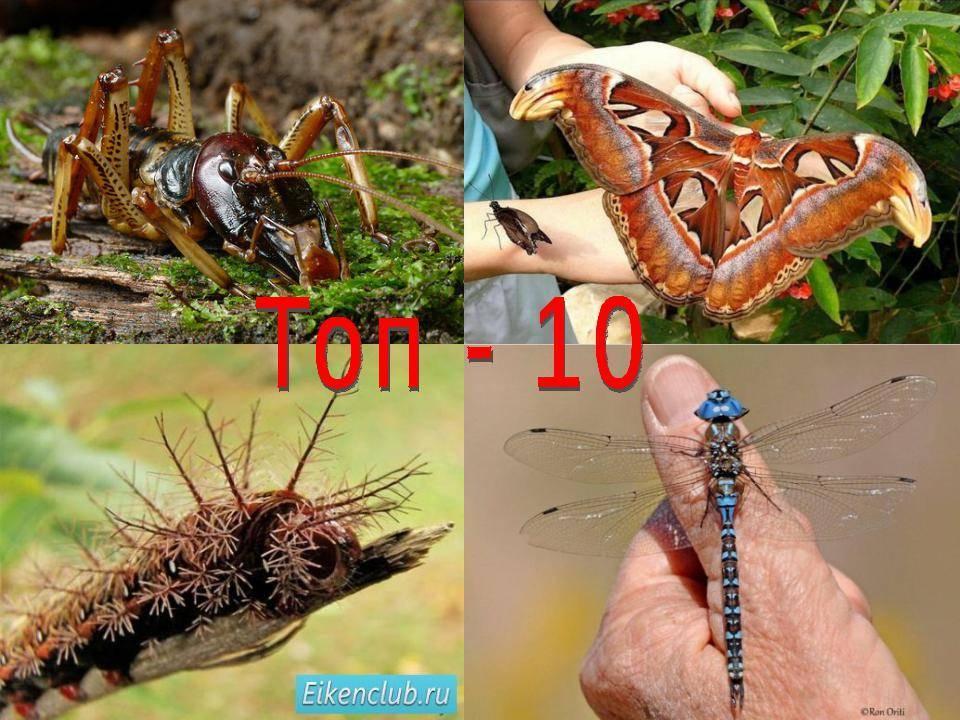 Любопытные особенности муравьев. муравьи – самые удивительные насекомые планеты