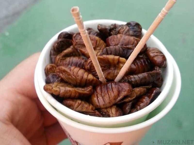 Топ-5 отвратительных деликатесов со всего мира