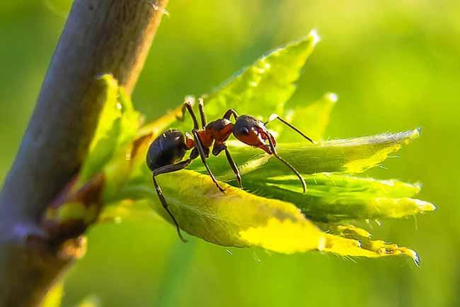Способы борьбы с муравьями в квартире