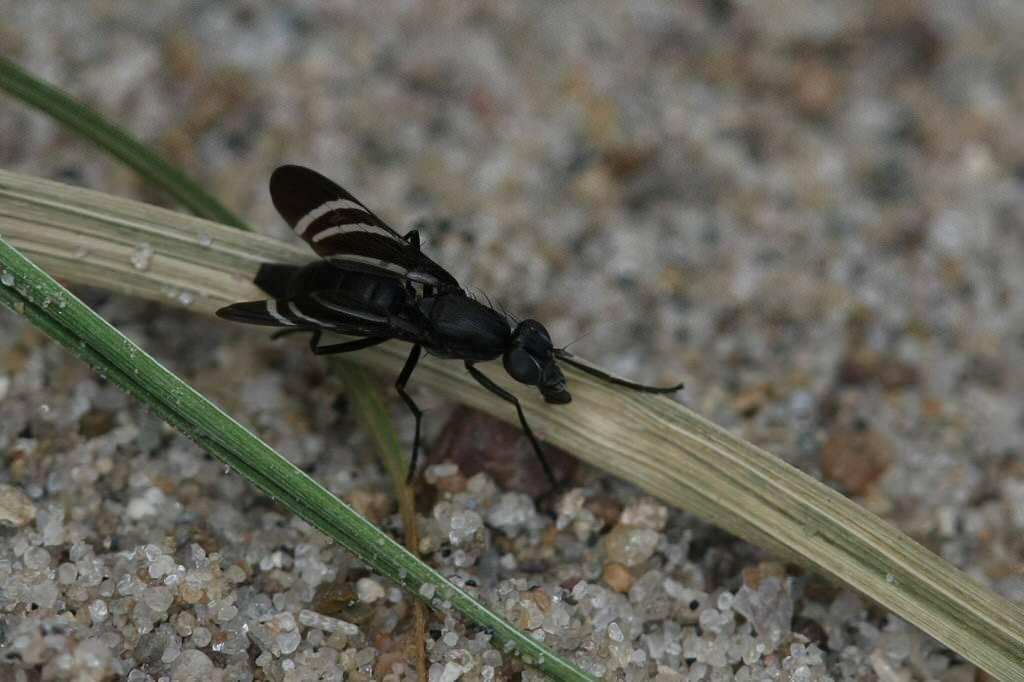 Луковая муха: как с ней бороться — профилактика и 6 методов борьбы