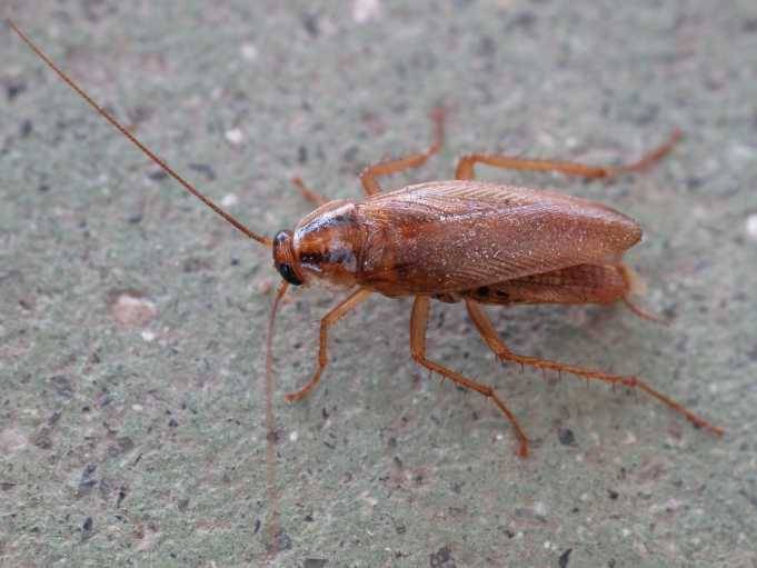 Интересные факты о тараканах: что мы знаем об этих насекомых