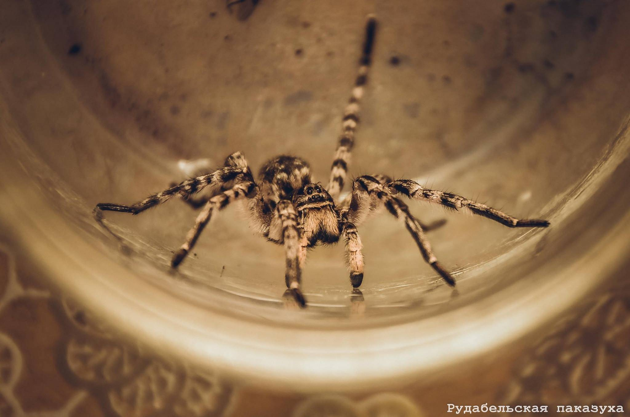 Что делать, если завелись пауки в квартире? как навсегда избавиться от пауков в своем доме