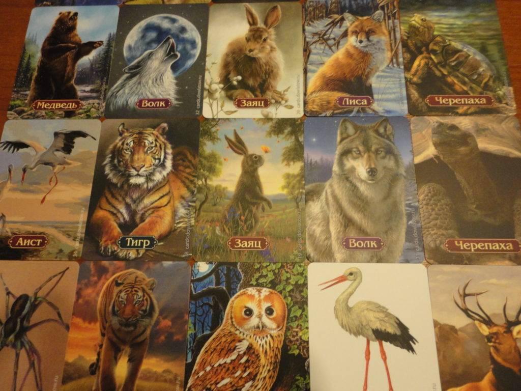 Пауки-волки – терпеливые охотники, которых кормят «ноги. карадагский природный заповедник сообщение о пауке волке кратко