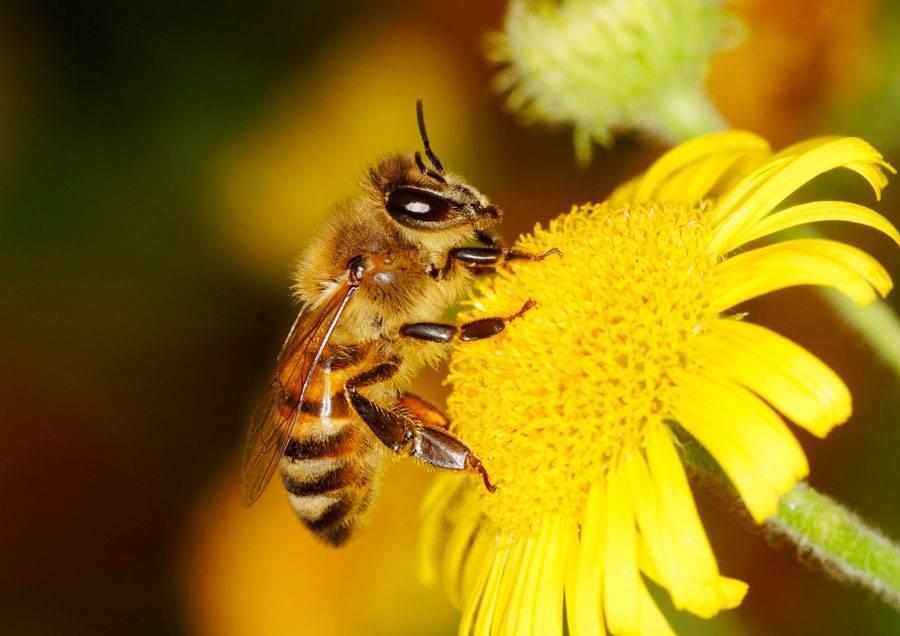 Где зимуют осы – скрытая жизнь насекомых
