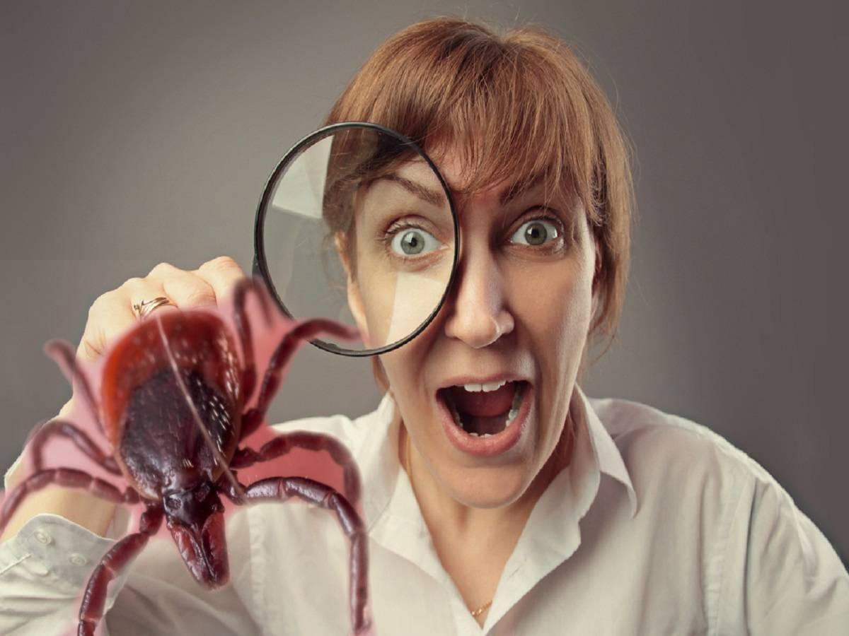 Что покрывает и не покрывает страховка от укуса клеща?