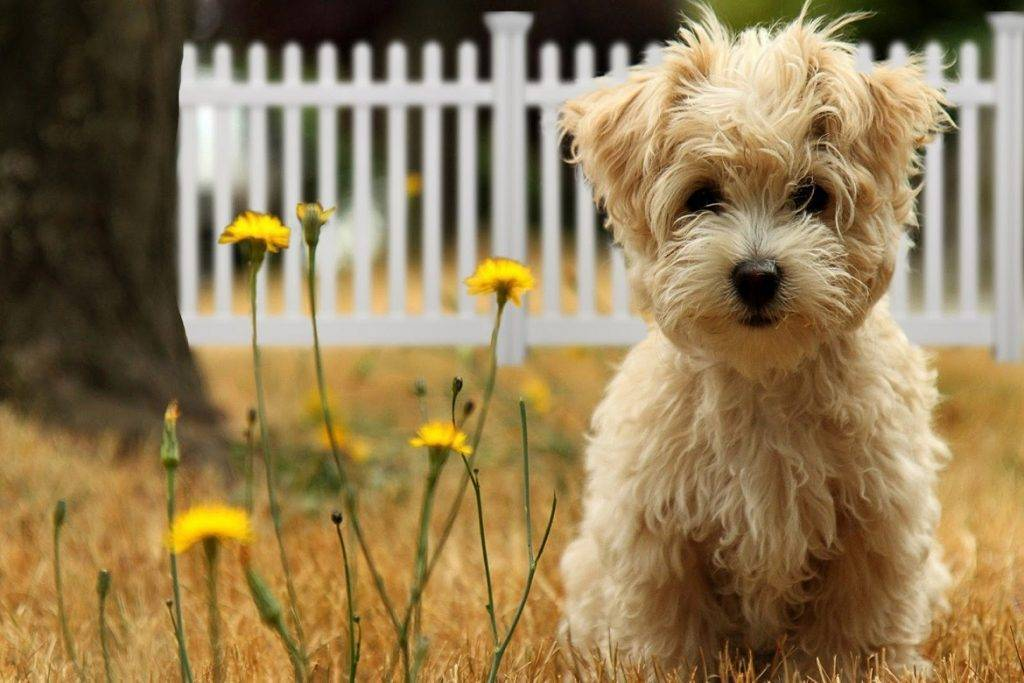 «бравекто» для собак: инструкция по применению