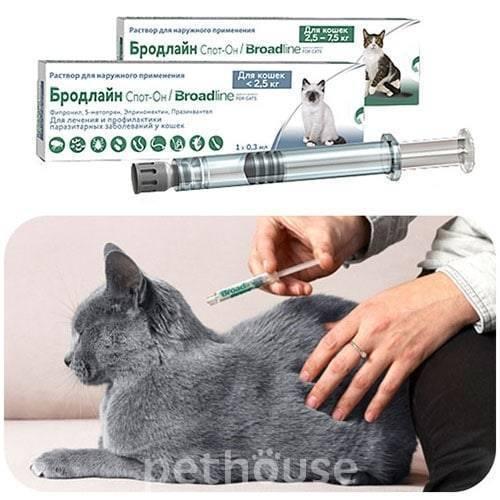 Эффективные и безопасные капли для кошек от блох: куда капать, помогают ли они от глистов и клещей, какие лучше?