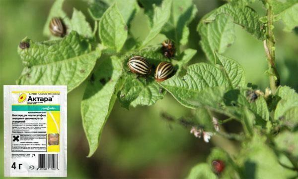 Как применять препарат актара для обработки плодовых деревьев и растений