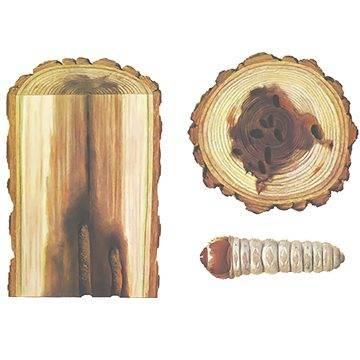 Кто съедает деревья изнутри: стволовые вредители сада