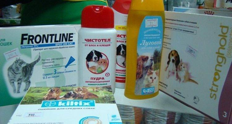 Лекарства от клещей для собак: обзор эффективных таблеток