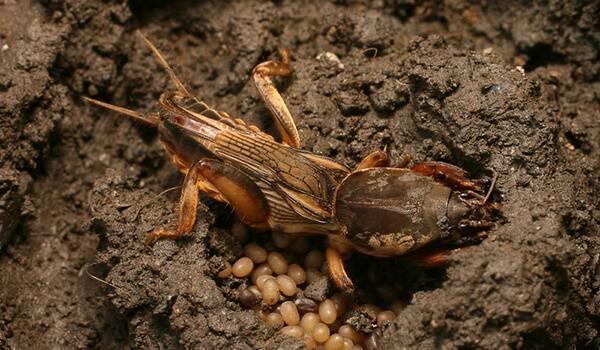 Образ жизни насекомых – описание, фото и видео