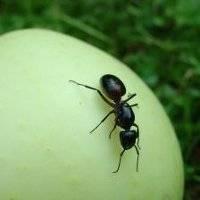 Сколько живет муравей