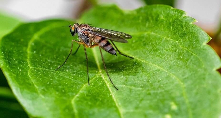 Интересные факты о комарах, или за что уважать кровососа. интересно, а чем питаются комары? как отличить самку комара от самца